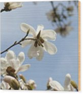 Magnolia Flowers White Magnolia Tree Art 2 Blue Sky Giclee Prints Baslee Troutman Wood Print