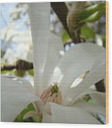 Magnolia Flowers White Magnolia Tree Flower Art Spring Baslee Troutman Wood Print