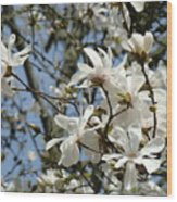 Magnolia Flowers White Magnolia Tree Flowers Art Prints Wood Print