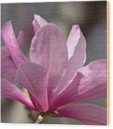 Magnolia Galaxy 7044 Wood Print