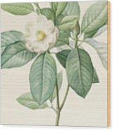 Magnolia Glauca Wood Print