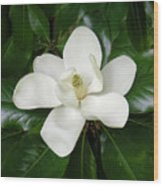 Magnolia Glorious Wood Print