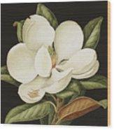Magnolia Grandiflora Wood Print by Jenny Barron