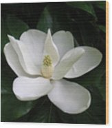 Magnolia Greeting The Day Wood Print