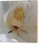 Magnolia Happiness Wood Print