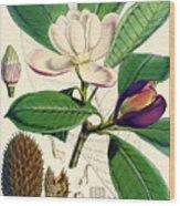 Magnolia Hodgsonii Wood Print