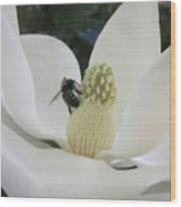 Magnolia Honey Wood Print