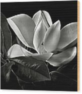 Magnolia In Black And White Wood Print