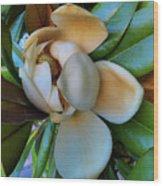 Magnolia In Oxford Wood Print