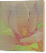 Magnolia In Spring Wood Print