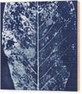 Magnolia Leaf Skeleton Wood Print
