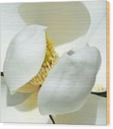Magnolia Macro Wood Print
