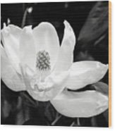 Magnolia Memories 3- By Linda Woods Wood Print