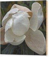 Magnolia No 1 Wood Print