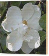 Magnolia No 7 Wood Print