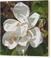 Magnolia No 8 Wood Print