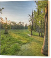 Magnolia Plantation Cypress Swamp Sunrise Wood Print