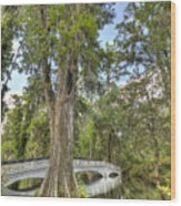 Magnolia Plantation Cypress Tree Wood Print