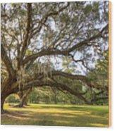 Magnolia Plantation Live Oak Sunrise Wood Print
