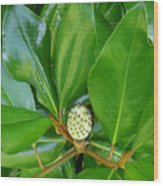 Magnolia Pod Wood Print