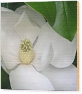 Magnolia Protected Wood Print