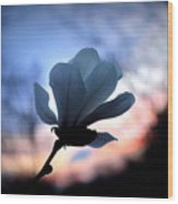 Magnolia Sunset Wood Print