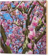Magnolia Tree Beauty #3 Wood Print