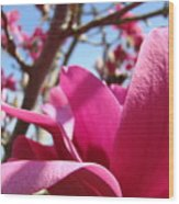 Magnolia Tree Pink Magnoli Flowers Artwork Spring Wood Print
