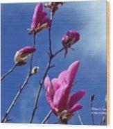 Magnolia Tulip Tree Wood Print