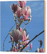 Magnolias And Blue Skies - Springtime In The Valley Wood Print