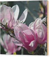 Magnolias Are Blooming Wood Print