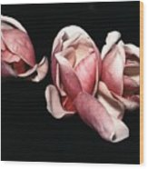Magnolias At Night Wood Print