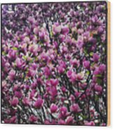 Magnolias In Spring Wood Print