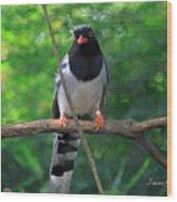 Magpie I Wood Print