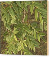 Mahogany Leaves On A Branch Wood Print