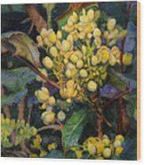 Mahonia Morning  Wood Print