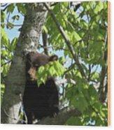 Maine Black Bear Cub In Tree Wood Print
