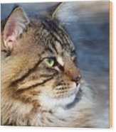 Maine Coon II Wood Print