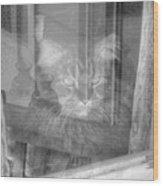 Maine Coon In Window Wood Print