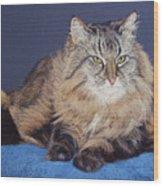 Maine Coon Kitty Wood Print