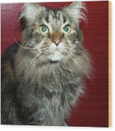 Maine Coon Portrait Wood Print