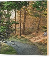 Maine Forest At Dusk Wood Print