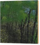 Maine Forest Wood Print