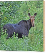 Maine Moose Wood Print