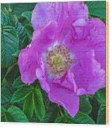 Maine Rose Wood Print