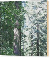 Majesic Redwoods Wood Print