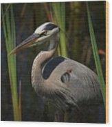Majestic Bird Wood Print