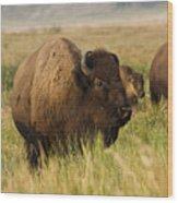 Majestic Bison Wood Print