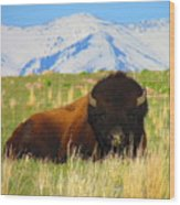 Majestic Buffalo  Wood Print