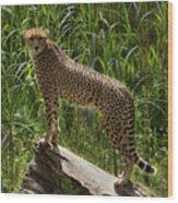 Majestic Cheetah Wood Print